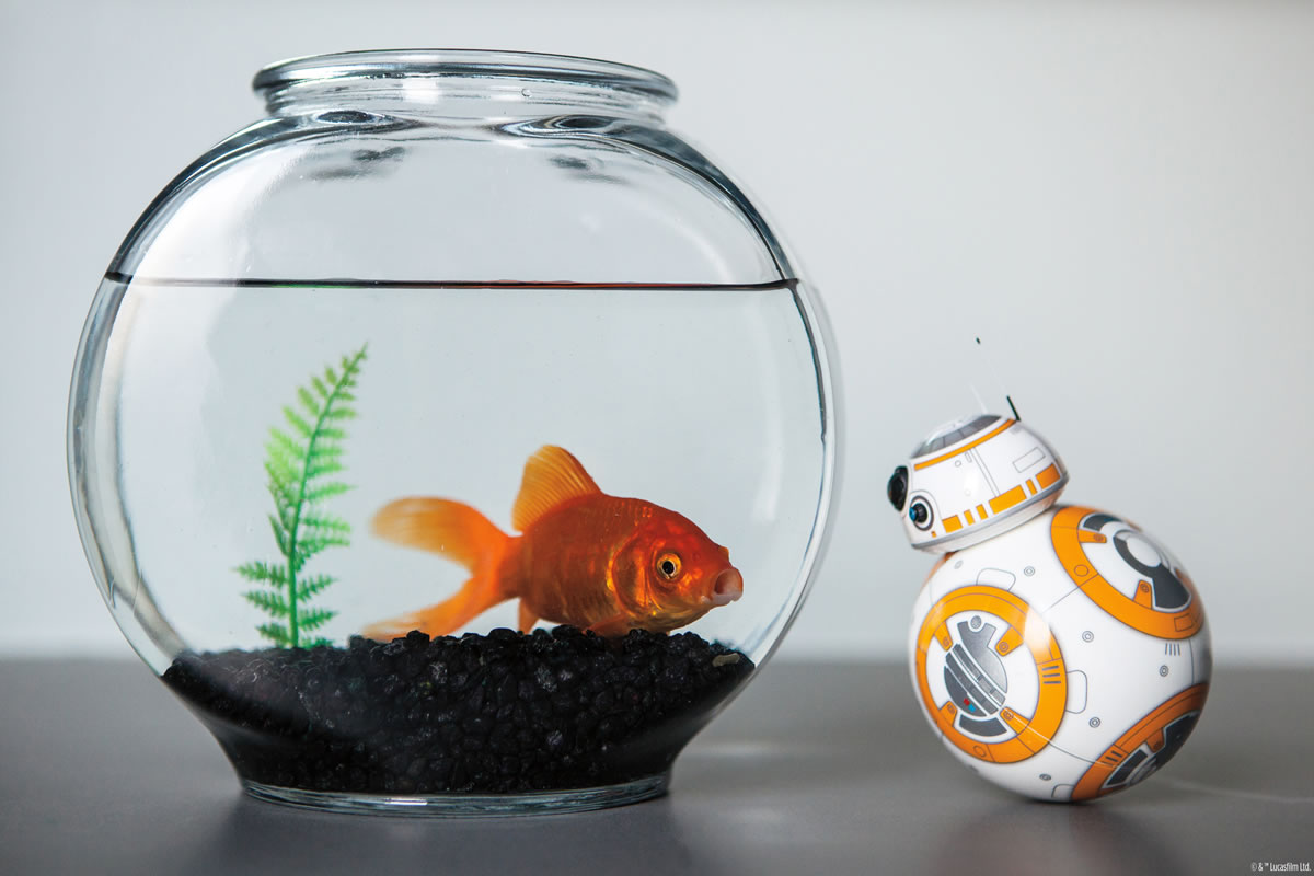 BB-8™ Droids by Sphero © & ™ Lucasfilm Ltd.