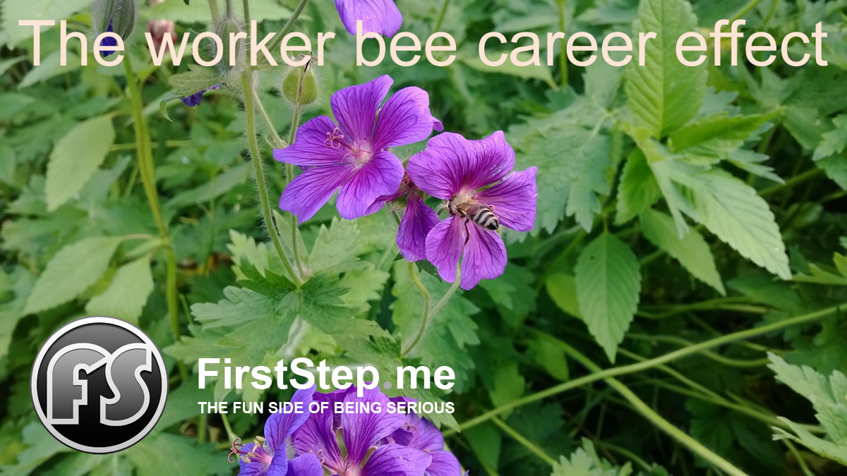The worker bee and trying to decipher the graduate employment market